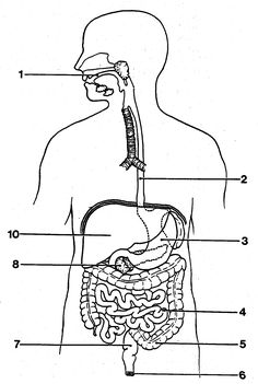 Circulatory System Diagram Blank   studies // medicine ...