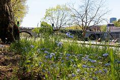 Parisculteurs : verdir la capitale grâce à la permaculture