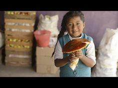 En México existen seis mil especies de hongos, sólo 5% se ha estudiado.