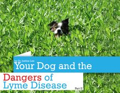 Your Dog and the Dangers of Lyme Disease: Part II Lyme Disease Tick, Flea And Tick, Medical Information, Pissed, Ticks, Medical Conditions, Pet Health, Dog Care, Fleas
