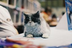 Purrrfectly groomed #cats #animals #eastershow