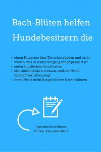 Hundezeitung | Bach-Blüten Online-Kurs | http://hundezeitung.info