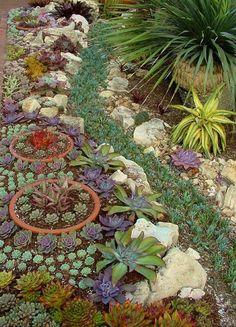Hermoso Jardin Suculento... - Amy AcarBra - Google+
