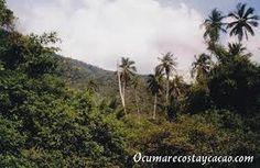 Resultado de imagen para pinturas de la naturaleza de la selva amazonica