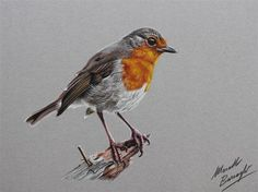 Realistic-Colored-Pencil-Drawings-by-Marcello-Barenghi (90)