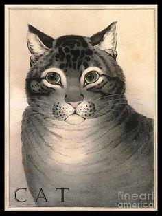 Gray Cat W Green Eyes Digital Art  - Gray Cat W Green Eyes Fine Art Print