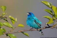Image result for songbirds singing