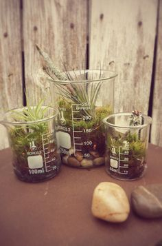 Glass Science Beaker Terrarium Trio with by HelloPlanted on Etsy, $28.00