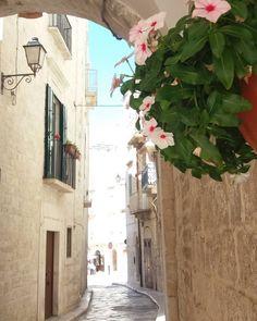 Angoli... #giovinazzophotowalk #yallersitalia #yallerspuglia Mattinata molto interessante! ✌ #Giovinazzo #Puglia #Apulia #Italia #Italy #centrostorico #piccoloborgo #borgoantico #flowers #oldcity #puglia_city #pugliamia #weareinpuglia #photography #pugliaview