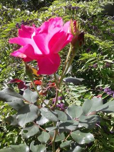 Rose outside the Farmhouse at Hope Springs Institute. Photo by Trish Breedlove
