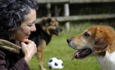 """What Not to Pair: The Consequence of Mixing Consequences   """"Repeated occurrences of """"food followed immediately by an aversive stimulus"""" will teach the dog to distrust and even avoid food. This is the real reason behind many cases in which the handler says, """"But my dog isn't motivated by food."""""""""""