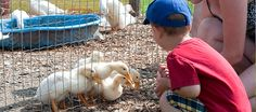 Brooks Farms, Ontario - Growing fun for over 100 years! Farm Fun, Durham Region, Bakery Cafe, Farms, Ontario, Special Events, Animals, Homesteads, Animales