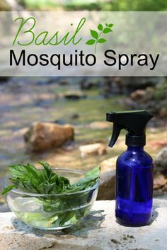 Homemade Basil Mosquito Spray || The Mommypotamus