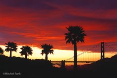Golden Gate Bridge At Sunset With Palm Trees, San Francisco By Mitchell Funk   mitchellfunk.com