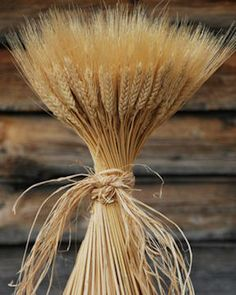 A perfect addition to your home decor at any time of year are bundles of fall wheat. These natural wheat bundles have been specially created to reflect the richness of nature. The sheaves of these beautiful wheat bundles contain 16 ounces of wheat stalks cut to a total height of about twenty inches.