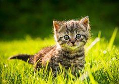 Babykatzen Findelinge 2014-15 by bernhardklestil #animals #pets #fadighanemmd