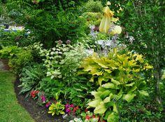 Amazing list of perrenial plants-- Three Dogs in a Garden: Joe's Garden: Part 1