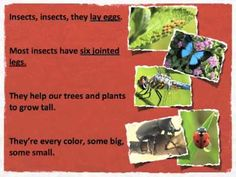 Citation (MLA)    What Is an Insect? .  Prod. Twin Sisters.  Twin Sisters, 2012. Discovery Education. Web. http://www.discoveryeducation.com.