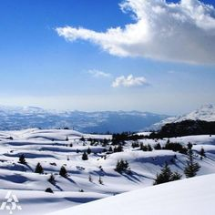 LEBANON, CEDARS AMONST THE SNOW, NICE