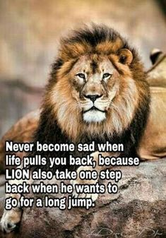 Motivational Quotes 377 Motivational Inspirational Quotes for success 45