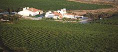 The Alentejo Vineyards Colours