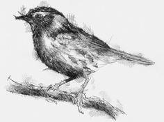 Artist Sean Briggs producing a sketch a day Dunnock #art #drawing #http://etsy.me/1rARc0J #on.fb.me/1RjfCMB #sketch #sparrow