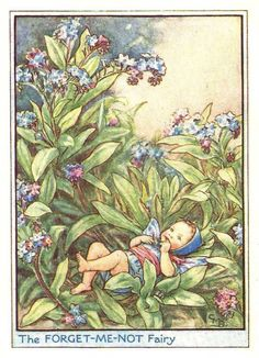 7ac124f54 This beautiful Forget-Me-Not Flower Fairy Vintage Print by Cicely Mary  Barker was printed and is an original book plate from and early Flower  Fairy book.