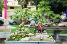 bodhi Bonsai   bodhi_tree-2