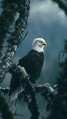 Picture Frame Bird White-tailed eagle Composite Plate Retro