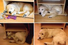 """animais depois de crescidos 15 """"Apertado? Não notei"""""""