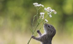 Even squirrels take time out to smell the daisies!