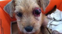 Government of St Vincent & The Grenadines: Stop Animal Cruelty & Enforce Animal Cruelty Laws