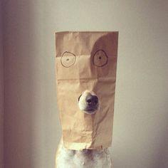 Maddie a Coonhound : Galeria de Fotos « Chongas – Um Blog sem Credibilidade (mentira!)