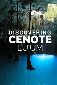 Turquoise water will receive you and welcome you to the majesty of this cenote.
