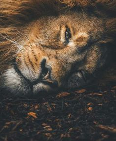 Very Human Like Expression. – - Belezza,animales , salud animal y mas Animals And Pets, Funny Animals, Cute Animals, Animals Planet, Nature Animals, Beautiful Cats, Animals Beautiful, Animal Jaguar, Big Cats