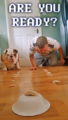 Bulldog Vs Human   Who Wins?