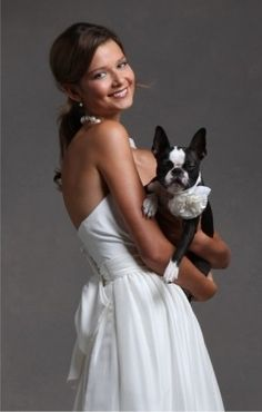 @Sydney Kate Jones- bride and boston terrier...you could do this with Ronan and then we could wipe the drool off your dress. :)