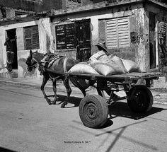 Daily life in Gibara  #street #people #ok_street #ig_global_people #streetlife_award #ig_energy_people #ig_captures #lifestyle #street_perfection #bnw #loves_cultures #travel #igtraveller #worlderlust #blackandwhite #worldplaces #wanderlust #street_bnw #ig_captures #gibara #cuba #america #caribbean #centralamerica #ig_cuba #loves_cuba  #igerscuba #ucic by creus.nuria