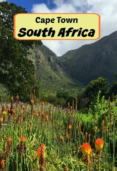 Explore Cape Town, South Africa in Photos - Traveling Mom