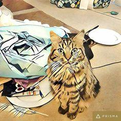 #Kitty #cat #prisma