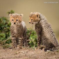 Baby Meeting by IrisBraunPhotography #animals #animal #pet #pets #animales #animallovers #photooftheday #amazing #picoftheday