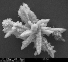 Aluminum phosphate crystal ferns