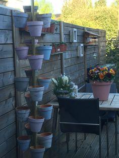 Our lovely backyard