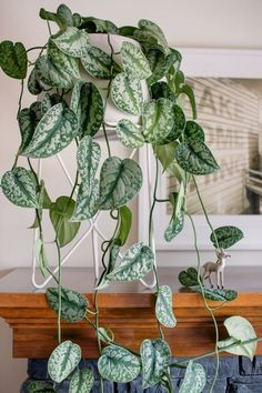 3 Creative And Inexpensive Cool Ideas: Artificial Plants Office Minis artificial flowers felt.Artificial Plants Ideas Home Decor artificial plants outdoor pots.Artificial Plants Decoration Home. Small Artificial Plants, Artificial Plant Wall, Artificial Flowers, Hanging Plants, Indoor Plants, Hanging Baskets, Garden Plants, Indoor Gardening, Plante Pothos