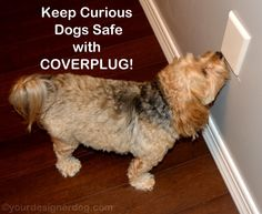 Keep Curious Dogs Safe with COVERPLUG - YourDesignerDog