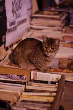 well-read #cat