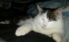 Skylar's fall Funny Stuff, Cats, Animals, Funny Things, Gatos, Kitty Cats, Animaux, Animal, Cat