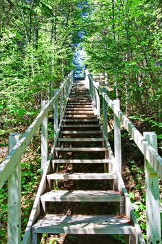 Some of the 2,200 stairs on the Alexander Murray Trail in Central Newfoundland #hiking #Newfoundland #Newfoundlandhike