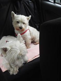 Roksislawa & Fionisława on their way for beauty treatment 😘👀💇🏼🐶🐕