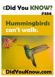 Hummingbirds can't walk. http://edidyouknow.com/did-you-know-556/